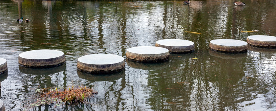 Japanese garden stepping stones with koi and ducks.