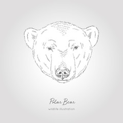 Hand drawn Sketch Head of Polar Bear. Vector illustration