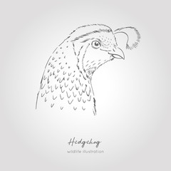 Isolated quail bird head illustration. Hand drawn vector graphic. Organic sketched farming birds. Use for farm logo branding, restaurant, menu, grocery, market, store, party, meal