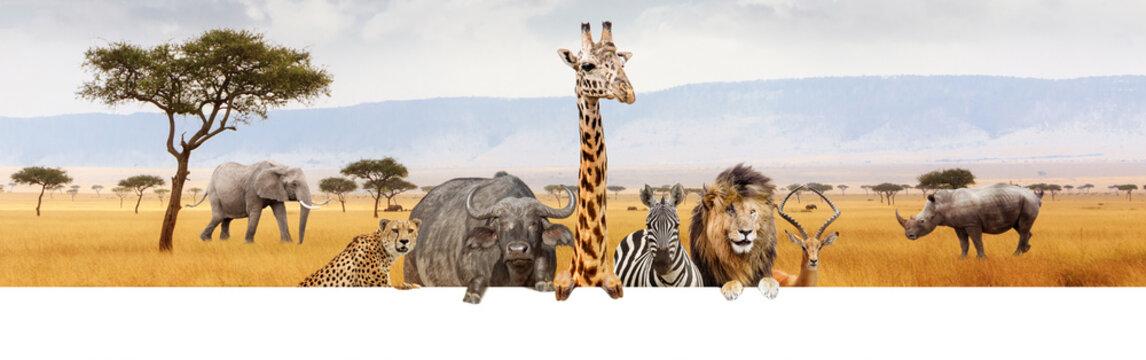 Africa Safari Animals Over Web Banner