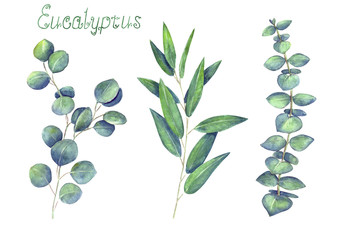 Eucalyptus leaves and branches blue green set isolated on white background