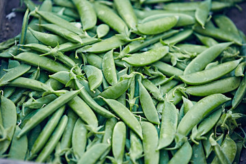 fresh picked sugar snap peas