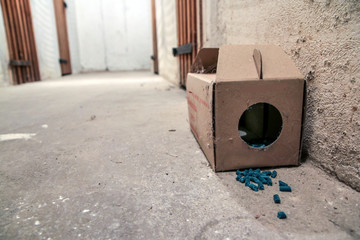 A picture of a paper rat trap with some pellets with poison outside of the box. Dangerous to touch or eat.