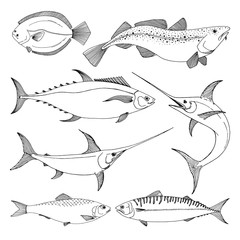 Set of different sea fishes. Vector illustration in sketch style