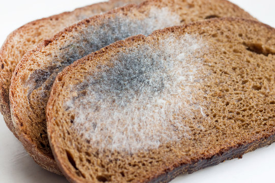 Slices of stale bread with mildew. Spoiled products_