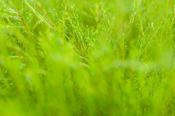 Grass background with lovely lens blur.