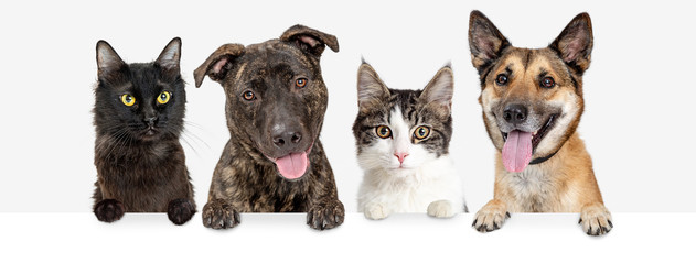 Row of Cats and Dogs Hanging Over White Web Banner