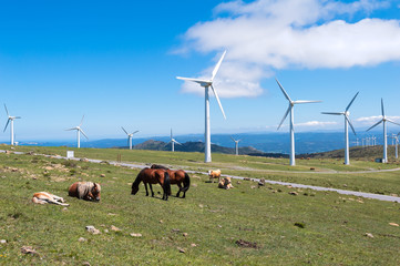 Landscape with horses, wind turbines for electric power generation