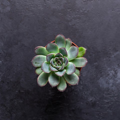 Succulent on a black stone table Copy space Top view