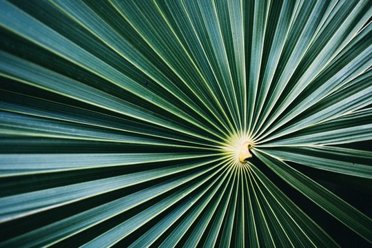 Close up of concentric green leaf