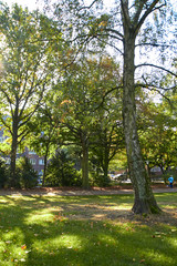 Photo of a park in a German city. Beautiful nature of Germany. Green park area of Hamburg. Park paths for walking people. Beautiful nature on a sunny day.