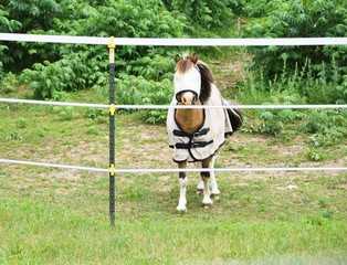 Pony in Blanket and Fly Mask