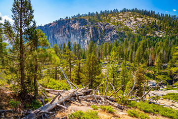 Beautiful Yosemite National Park forest
