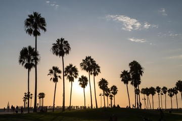 Palms in backlight at sunset, Venice Beach, Los Angeles, California, USA, North America