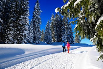 Hikers on Germany's first premium winter hiking trail, Hemmersuppenalm, Reit im Winkl, Chiemgau, Upper Bavaria, Bavaria, Germany, Europe?, Europe