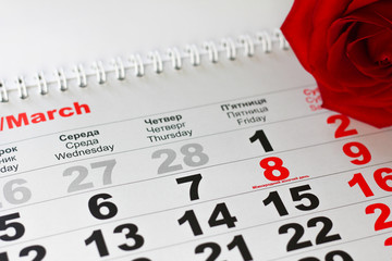 red rose lay on the calendar with the date of 8 march. Concept: International Women's Day