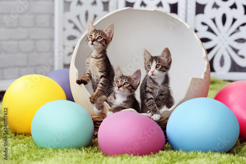 Tabby kittens in a giant Easter egg shell