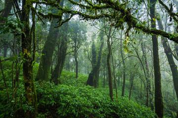 Tropical rain forest
