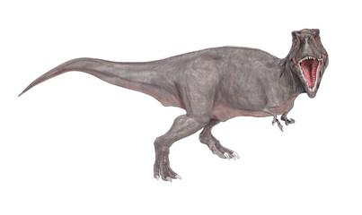 白亜紀後期の恐竜時代の終焉を飾る大型の肉食恐竜であり、様々な化石が発見されている。雌雄の大きさの違いや、家族単位での群れの形成等、生態への探求が今も続いている。上下の顎は重く鼻先は細長い。頭部を真正面から見るとフクロウのような視野の広がりをもつ。巨大な上顎が視野を妨げるような構造ではなく、獲物との距離感が正確につかめるような構造である。イラストは正面を向いた姿で描いた。