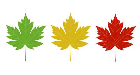 Maple illustration set