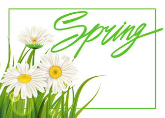 Spring daisies background fresh green grass, pleasant juicy spring colors. Spring handwriting Lettering. Vector, template, illustration, isolated