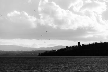 Birds flying over Trasimeno lake