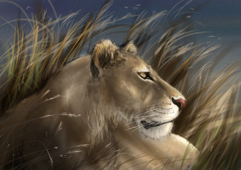 Lioness crouched down in tall grass observing