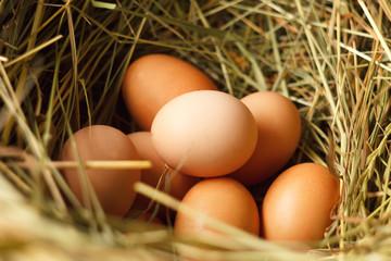 a hen's nest with eggs.fresh