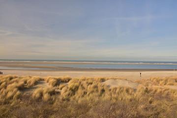 Plaża, wydmy, rośliny i morze.