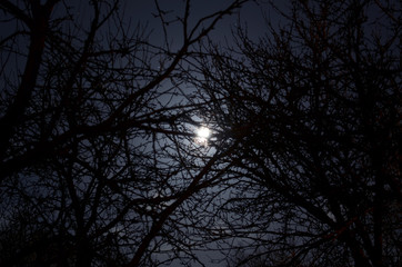 Darkness. Full moon behind naked tree branches in a starry sky and a little overcast night on countryside. Cold nights in early springtime. Laying on the ground and counting stars. Looking for ufo