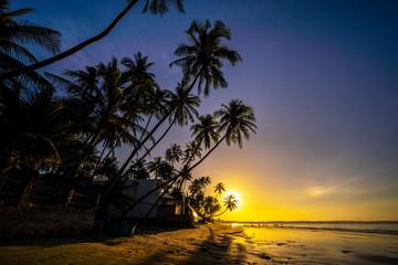 Palm trees and amazing  sky on sunrise at Fishing Village , Binh Thuan, Vietnam . Coconut Tree with Beautiful and romantic sunrise at Mui ne..