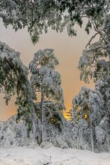Sunrise in the winterly forest - Sonnenaufgang im Winterwald