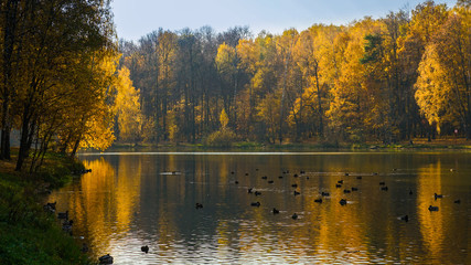 The forest loses its green color, changing it to yellow, red and orange. Ducks rejoice on the last warm days of the passing summer.
