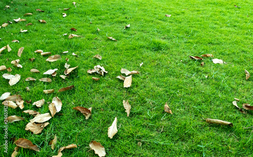 Dry leaves on green grass texture for background