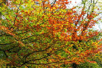 Vibrant red yellow and green throughout autumn canopy.
