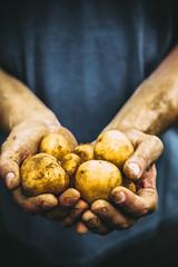 Farmer with potatoes