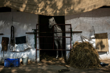 A horse stands inside a stable ahead of upcoming Derby race in Mumbai