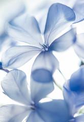 Blue flowery background