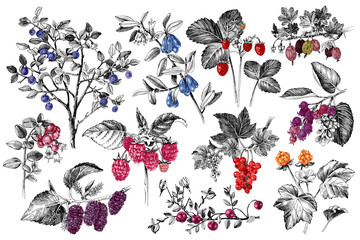 Set of hand drawn berries branches
