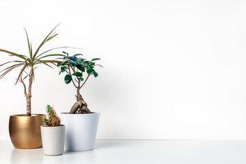 Shelf on a white empty wall. Copy space. Place for text. Scandinavian style. Bonsai in a white pot, cactus and palm in a golden casing