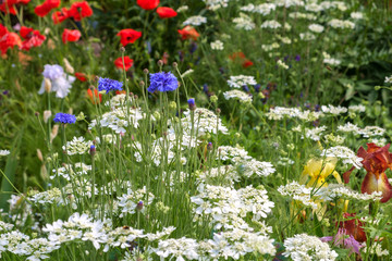 A late spring flower garden border packed with blooms
