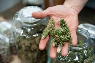 Handful of Light Cannabis Sativa blossom