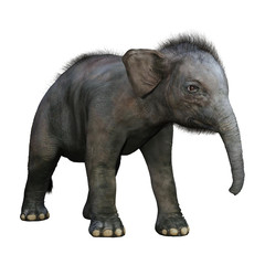 3D Rendering Indian Elephant Baby on White