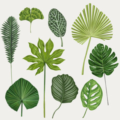 Tropical leaves botanical vector illustration (Monstera, Dieffenbachia, Ficus benjamina, Anthurium)