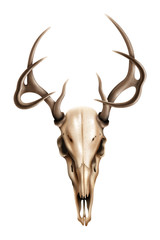 Realistic textured deer skull with horns vector illustration