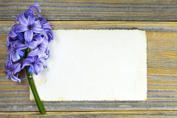 Blank greeting card and blue hyacinth flower