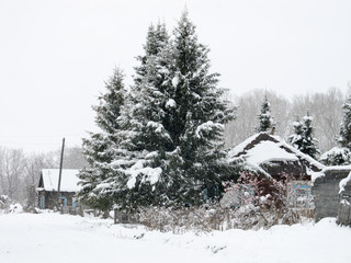 winter landscape with village house and trees
