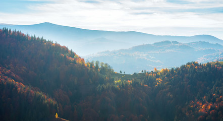 beautiful autumn landscape in mountains. blue hazy afternoon in countryside. rolling hills with colorful mixed forest. wonderful nature of romania