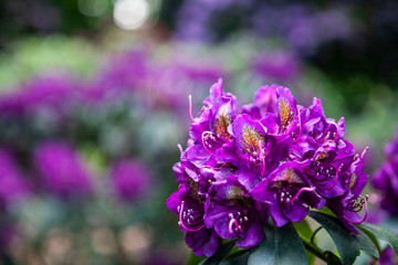 Obraz Kwiat - fototapety do salonu
