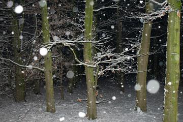 fallende Schneeflocken im abendlichen Wald. Standort: Deutschland, Nordrhein-Westfalen, Borken